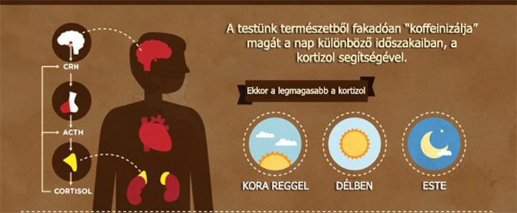 Kávés infografika I need coffee